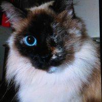 Profile image for Cynthia