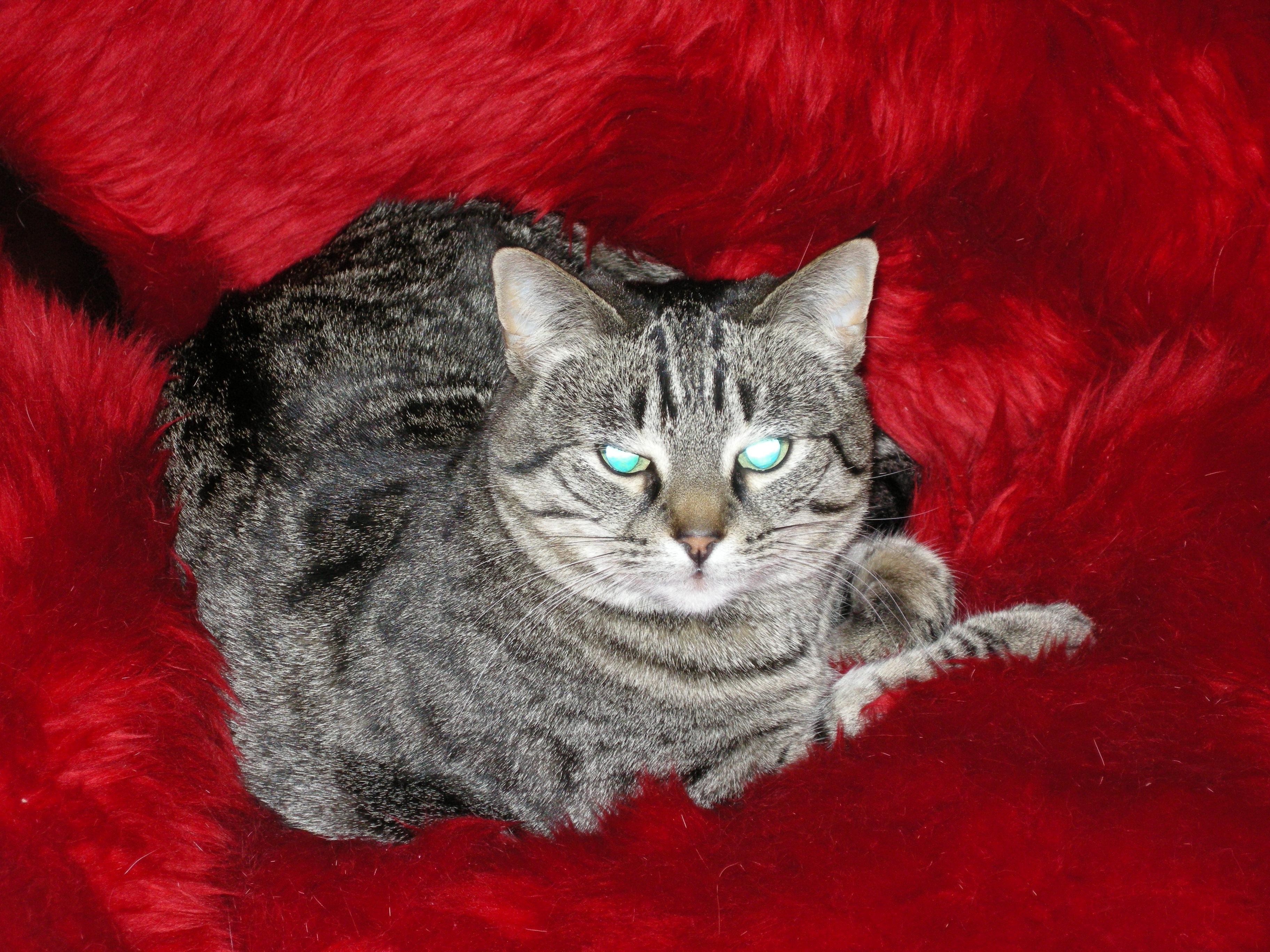 Rosemary Profile Image